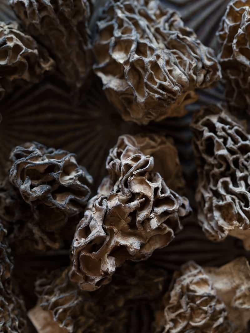 Dried morels for a Wild Mushroom Farro Riotto.