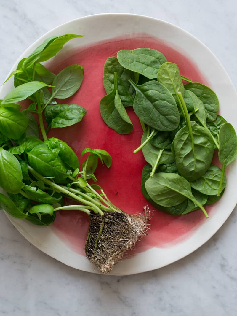 A plate of fresh spinach and basil with roots and picked off.