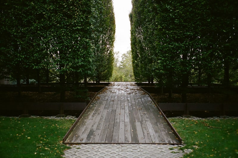 A tree lined wooden path.