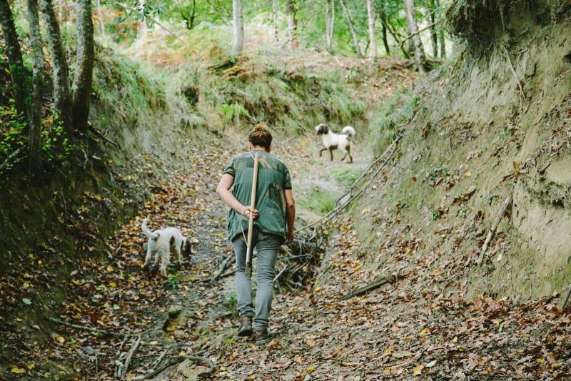 truffle_dogs