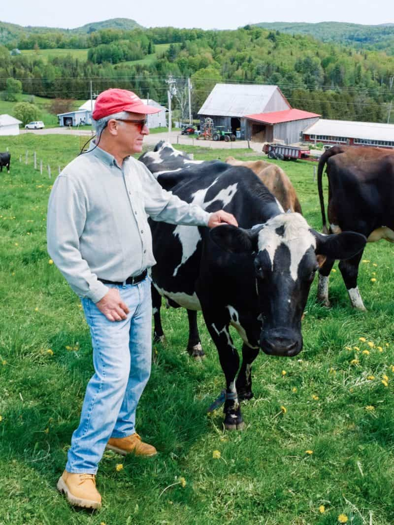 A man reaching out to a black and white cow.