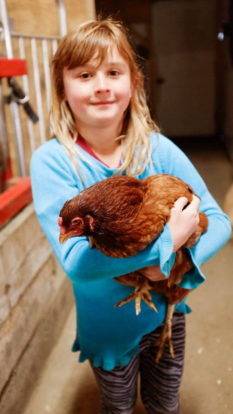 A young girl holding a chicken.