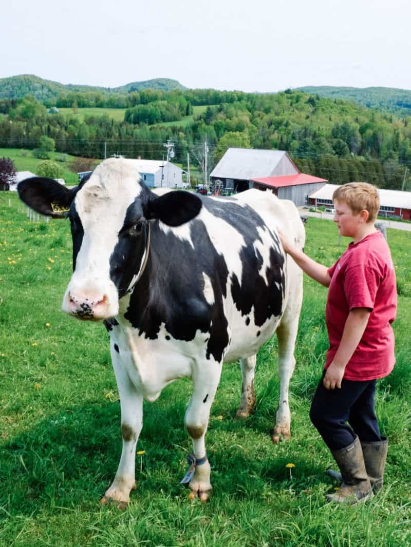A boy petting a cow standing in the grass.