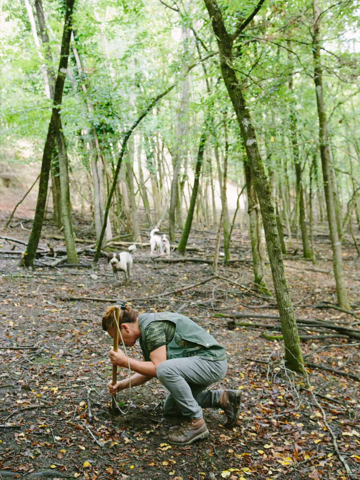 A woman digging for truffles in a forest with dogs.