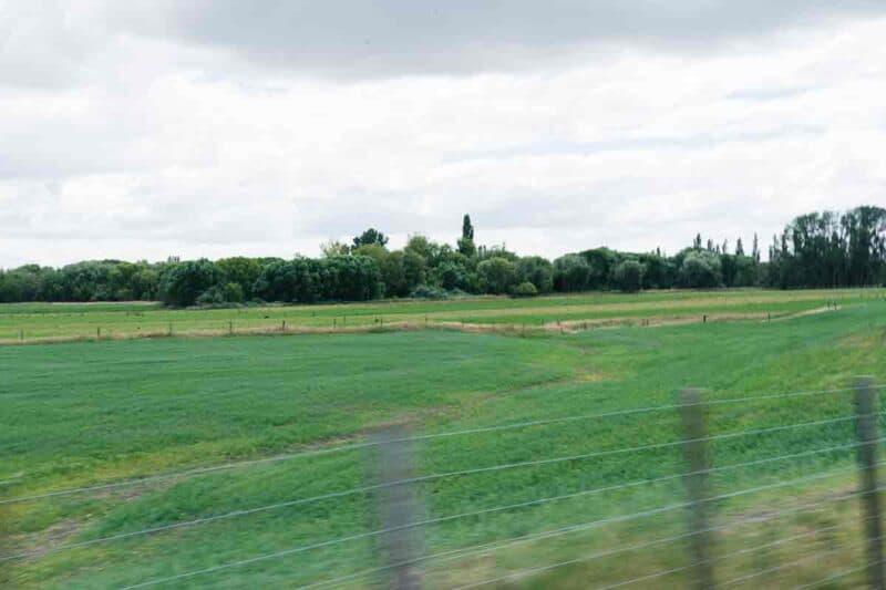 Lush green field.