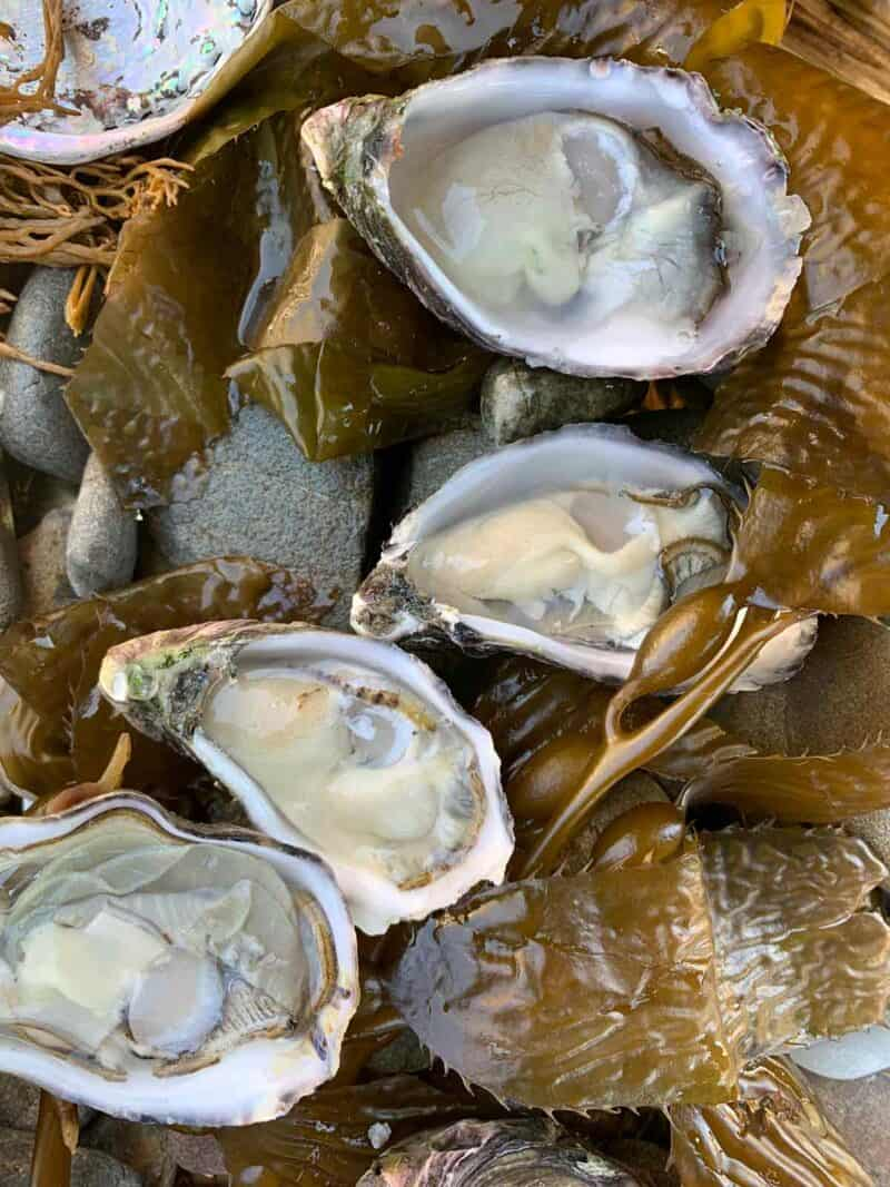 A close up of oysters.