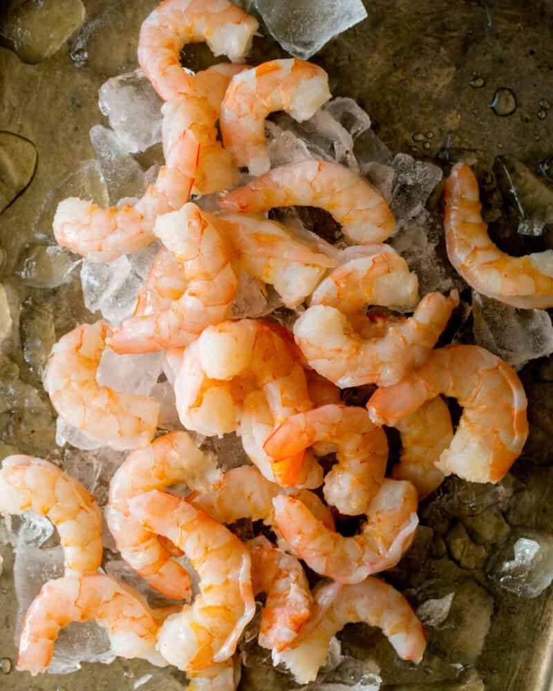 Cooked shrimp on a baking sheet with ice.