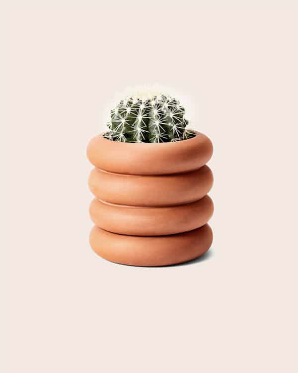 A planter with a cactus in it.