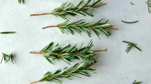 Rosemary sprigs with ends trimmed and leaves removed.