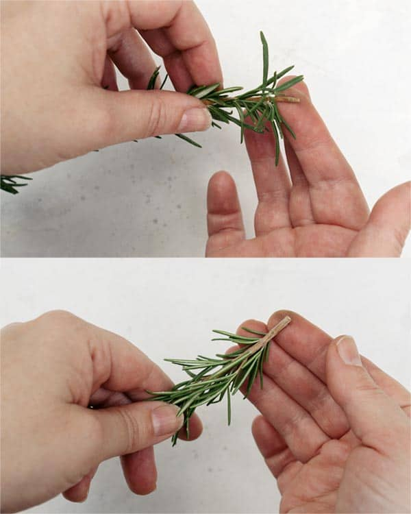 Peeling of rosemary leaves on either side of the stems.