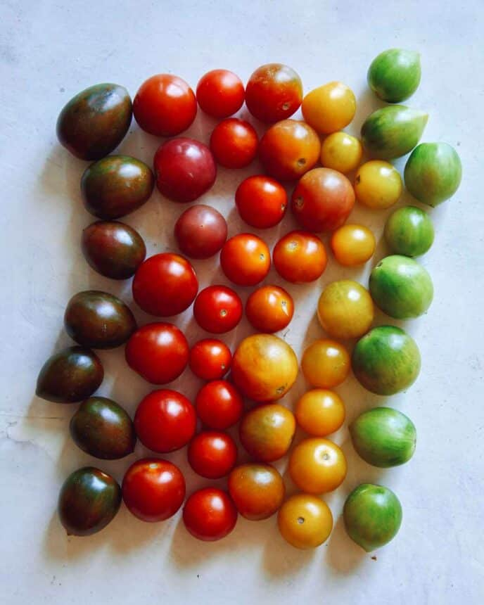 Heirloom cherry tomatoes in a row.